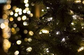3 great winter activities in charleston sc you u0027ll love pam
