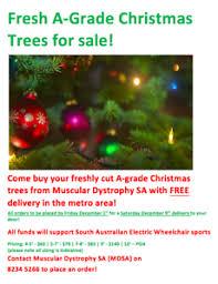 christmas tree in adelaide region sa gumtree australia free