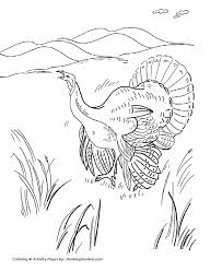 thanksgiving coloring pages wild turkey thanksgiving coloring