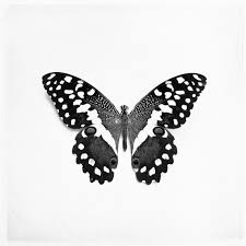 items similar to black and white photography butterfly wings