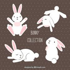 rabbit vectors photos psd files free download