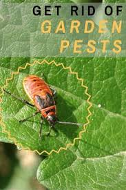 common garden pests and how to manage them infographic gardens