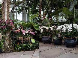 List Of Tropical Plants Names - plants found in thailand plantgarden thai flowers names plant