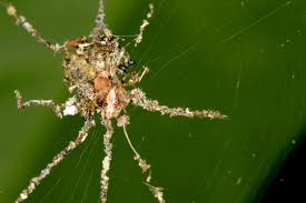 this spider makes fake spiders but why wired