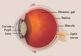 Diseases Of The Eye That Cause Blindness Facts About Glaucoma National Eye Institute
