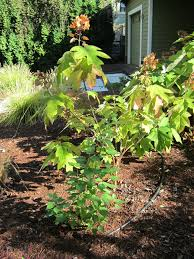 thanks craigslist my garden trees 3 portland tree tour
