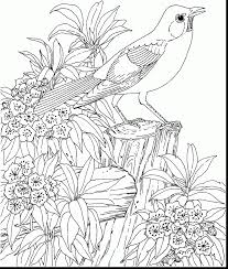 good hard bird coloring pages for adults with coloring pages