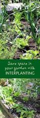 148 best interplanting images on pinterest vegetable garden
