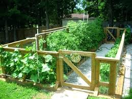 Home Vegetable Garden Ideas Easy Vegetable Garden Plan Home Vegetable Garden Ideas Fantastic