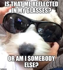 Dog With Glasses Meme - surreal dog imgflip