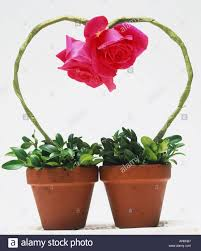 two potted plants long artificial green stems rising from pots