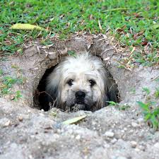 is your dog safe in an underground dog house paw castle