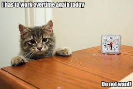 Working Cat Meme - i has to work overtime again today do not want working cats
