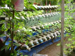 Vegetable Garden Containers by Small Yard Container Gardening To Be Multiplied For All The