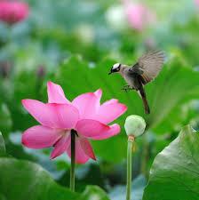 Flower And Bird - beautiful lotus flower and birds flowers