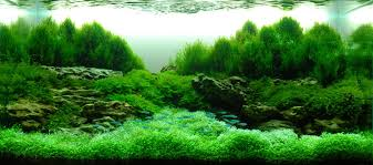 Aquarium Aquascapes Awesome Aquascape Aquarium With Dwarf Baby Tears Plant Feat