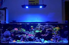 led lights for coral tanks kessil ap700 coming in september 185 watts wireless control for