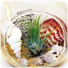 27 best air plants tillandsia images on pinterest air plants