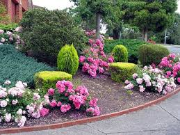 261 best gardening roses images on pinterest backyard ideas