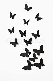 black butterfly isolated on white background stock photo colourbox