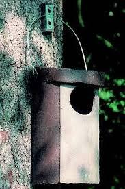 Barevnãƒâ Sova Vosk Pastely A Vod Barvy M Ptačí Budka 5 Pro Sovy Zelená Domácnost