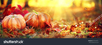 autumn thanksgiving day background pumpkins stock photo