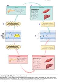 endocrine glands and hormones images human anatomy image