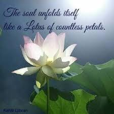 Zen Inspiration Made By Http Www Academ Nl U0026 Http Www Medischeqigong Nl