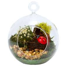 4 in glass globe terrarium with succulent plant gg4s the home depot