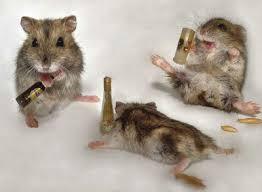 imagenes graciosas de amigos borrachos para amigos borrachos