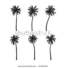 vector illustration palm trees stock vector 517981504