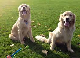 twin dog friendly landscaping dog friendly landscaping ideas