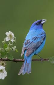 331 best birds blue turquoise images on pinterest beautiful