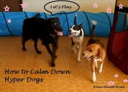 hyperactive dogs how to calm down your hyper dog pethelpful