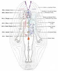 solar plexus location the re discovery of the human energy field think smarter
