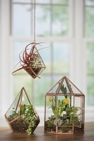 38 best terrariums u0026 succulents images on pinterest plants