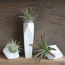 Indoor Plant Vases How To Care For The Lovely Air Plants That Adorn Your Home