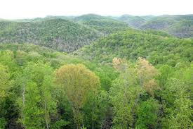 Kentucky Forest images Uk 39 s robinson forest could make millions from carbon credits
