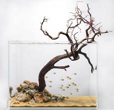 Aquascape Designs For Aquariums Aquarium Design Group Aquarium Fish Tank Aquascape