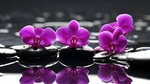 Flower Orchid Orchids Wallpaper Wallpaper