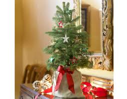 Small Christmas Trees For Decorating by Small Real Christmas Trees Christmas Decor Ideas