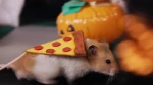 Tiny Hamster Dresses As Pizza Rat For Halloween Abc13 Com