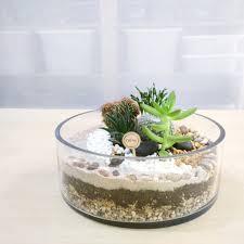 bay open terrarium