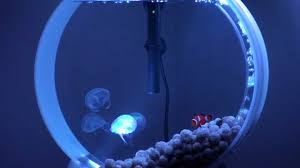 my desktop jellyfish tank part 2 pet jellyfish youtube
