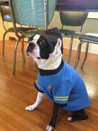 target halloween dog costumes dog costume u2013 basil u0027s travels