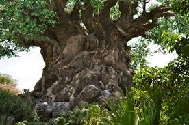 animal kingdom s tree of simple sojourns
