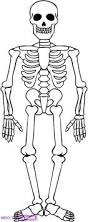 skeleton coloring sheet coloring page