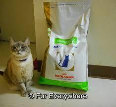 fur everywhere royalcanin meets a cat u0027s unique nutritional needs