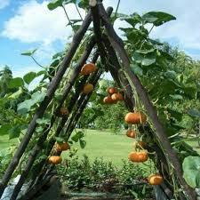460 best gardening images on pinterest vegetable garden