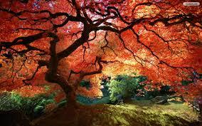 trees autumn fall hd wallpaper 1848798